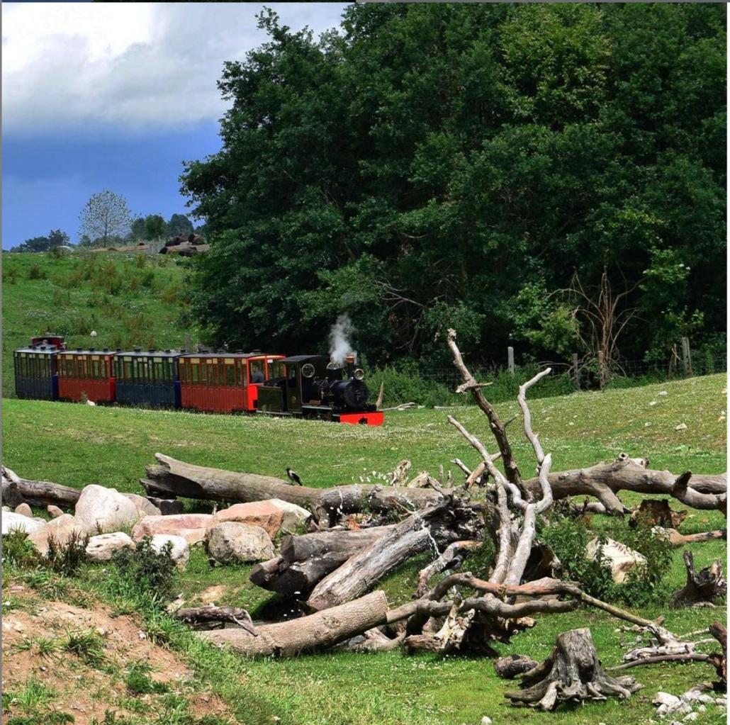 Safari toget i Ree Park